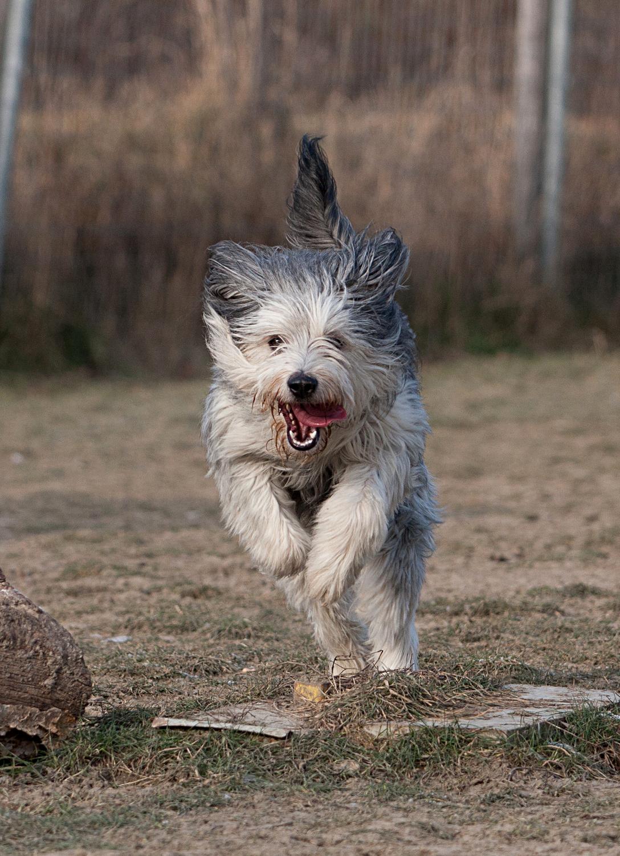 DER Tierheimhund 1