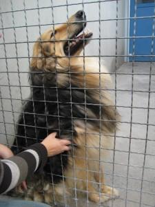 Dieser Hund scheint die Streicheleinheiten zu genießen, doch die Situation kann sich schnell verändern.