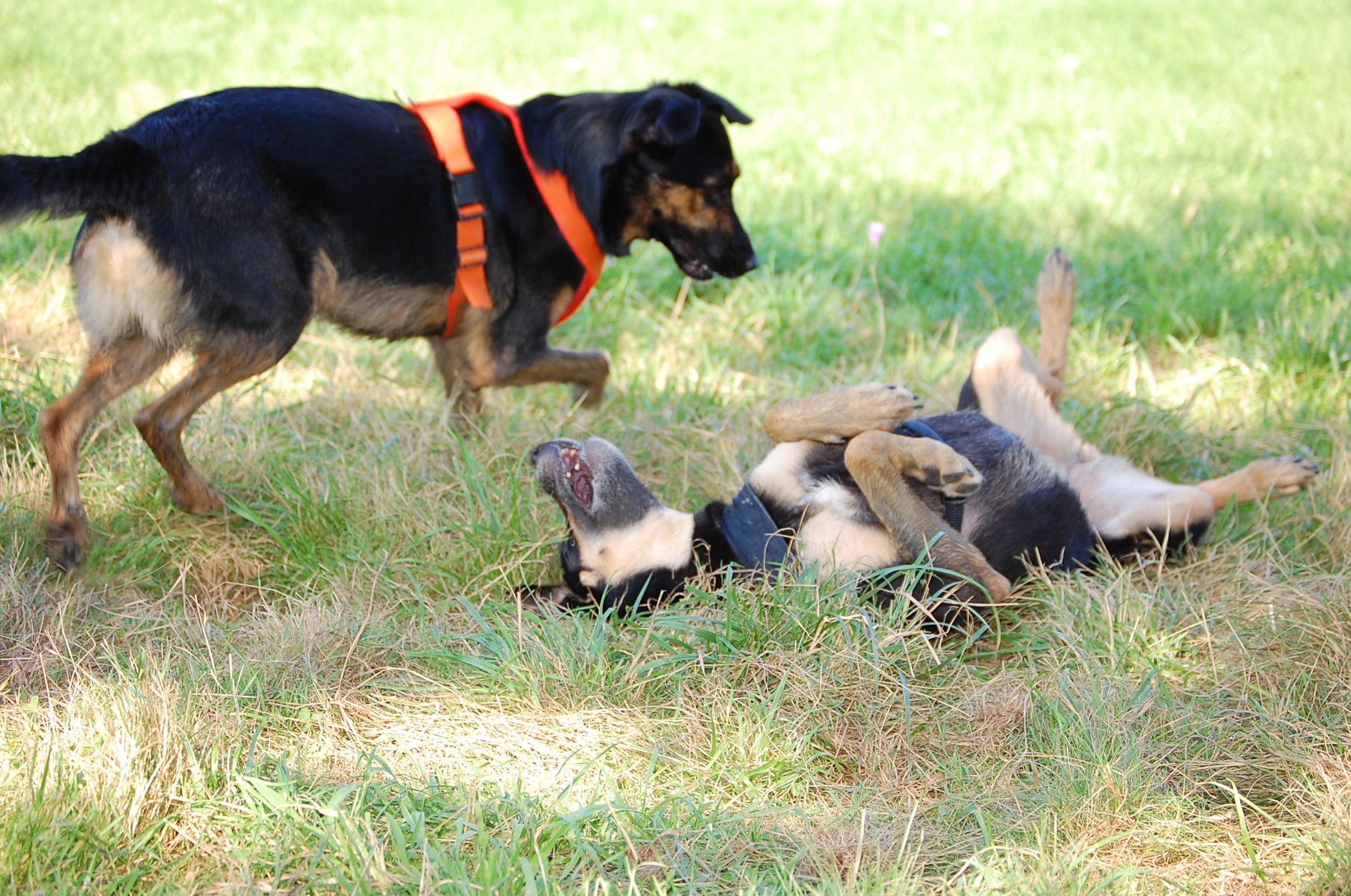 Bei einer Nachkontrolle kann zum Beispiel beobachtet werden wie entspannt der Hund sich im neuen Zuhause benimmt.