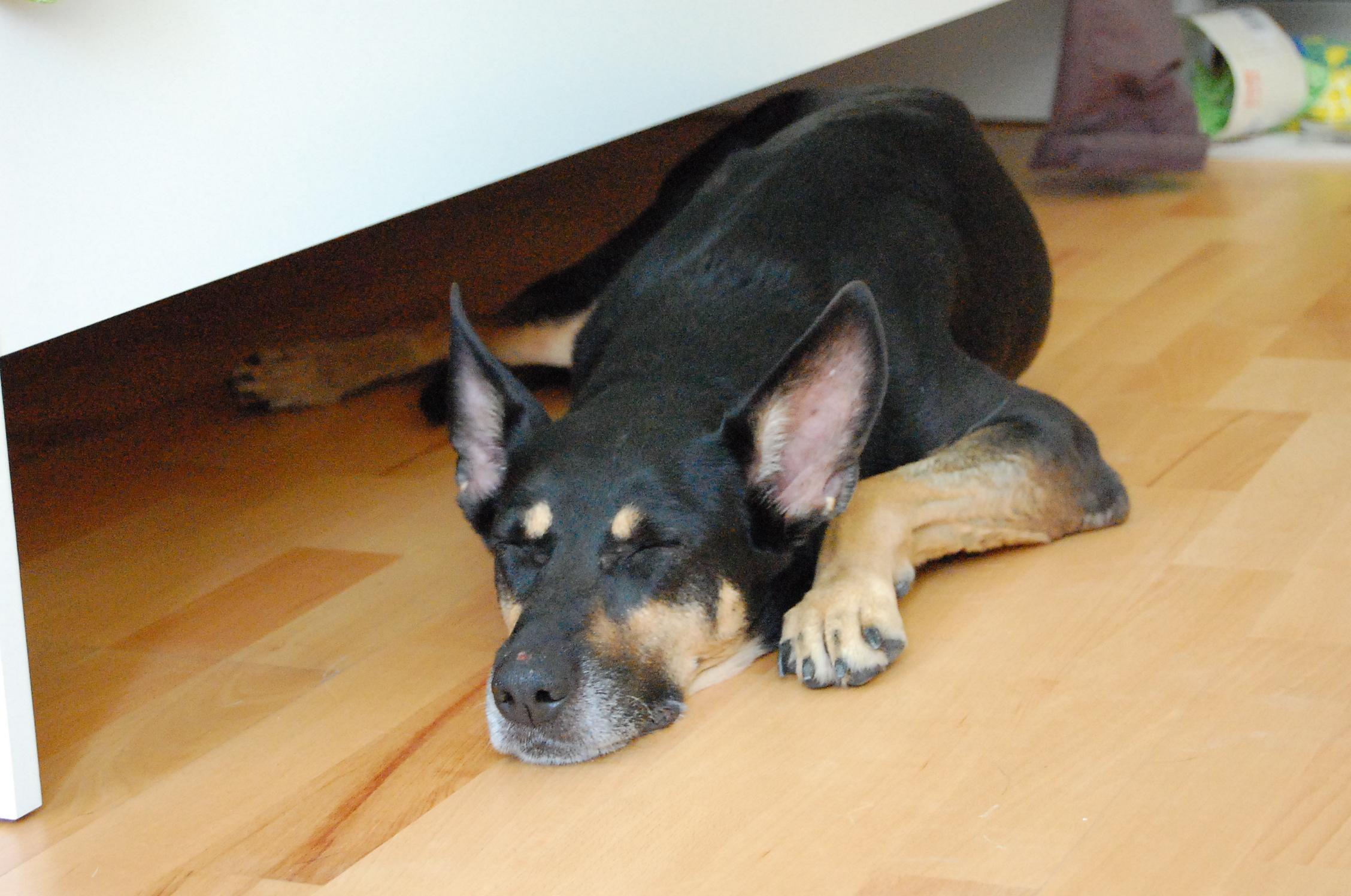 """Sich ausreichend """"Freizeit"""" für die Eingewöhnung des Hundes zu nehmen zahlt sich aus: so können Sie Ihren Hund gezielt in kleinen Schritten an den normalen Alltag in Ihrem Haushalt heranführen."""