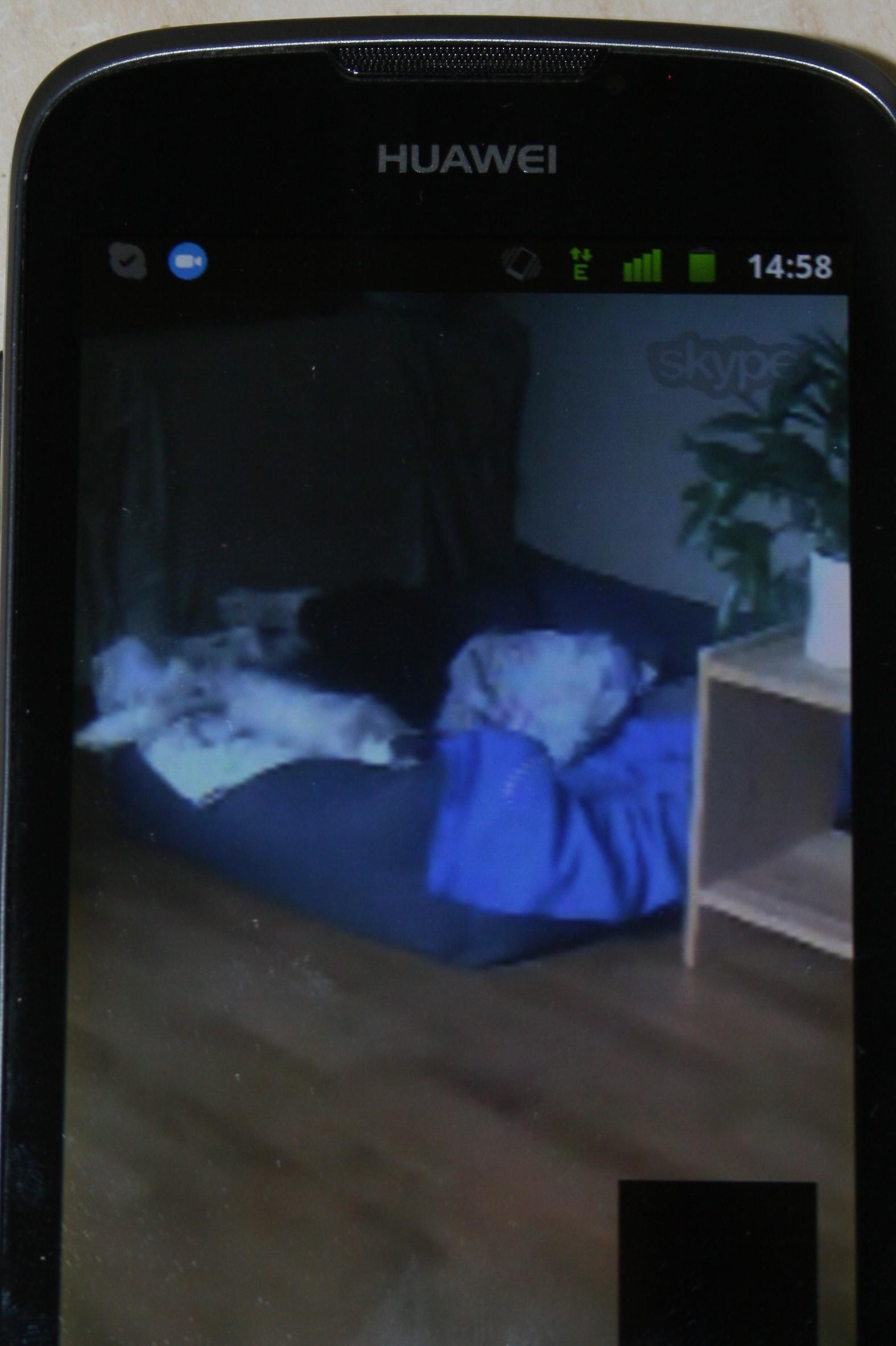 Überwachung eines Sitterhundes per Handy. Man erkennt nicht immer viele Details, aber zumindest ein entspannt liegender Hund ist in dem Fall sichtbar :-)